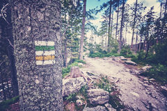L'annata ha tonificato la marcatura della traccia di escursione dipinta sull'albero Fotografia Stock Libera da Diritti