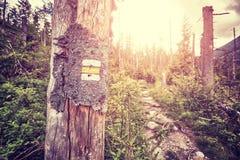 L'annata ha tonificato la marcatura della traccia di escursione dipinta sull'albero Fotografie Stock