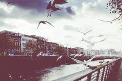 L'annata ha tonificato la vista Ha'Penny Bridge Dublin Ireland fotografie stock libere da diritti