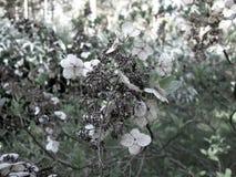 L'anno scorso fiore del ` s Petali asciutti fotografia stock libera da diritti