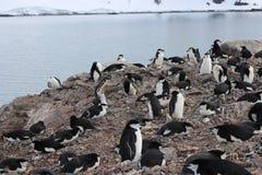 L'Antarctique - pingouins Photo stock