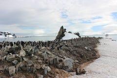 L'Antarctique - pingouins Photographie stock libre de droits