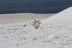L'Antarctique - pingouins Photo libre de droits