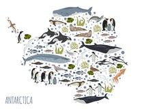 L'ANTARTIDE, l'Antartide, la flora e la fauna tracciano, elementi piani Anim illustrazione di stock