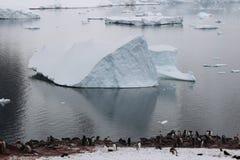 L'Antartide - pinguini Immagini Stock Libere da Diritti