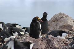 L'Antartide - pinguini Immagine Stock