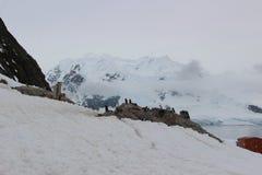 L'Antartide - pinguini Immagine Stock Libera da Diritti