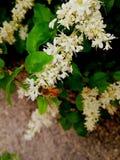 L'ape produrr? un buon miele fotografia stock libera da diritti