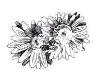 L'ape raccoglie il miele sui fiori Il vettore schizza disegnato a mano fotografia stock libera da diritti