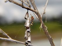 L'ape sta costruendo il suo nido immagine stock libera da diritti