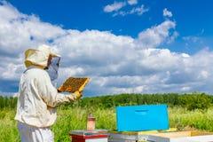 L'Apiarist, apiculteur tient le nid d'abeilles avec des abeilles photos libres de droits