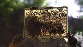 L'apicoltore estrae delicatamente il favo dall'alveare e lo esamina Guarda la cellula del miele per la presenza di stock footage