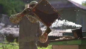 L'apicoltore estrae delicatamente il favo dall'alveare e lo esamina Guarda la cellula del miele per la presenza di video d archivio