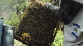 L'apicoltore ispeziona i favi con le api archivi video