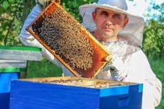 L'apicoltore osserva l'alveare fotografia stock
