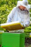 L'apicoltore osserva l'alveare immagine stock libera da diritti
