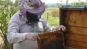 L'apicoltore ottiene il favo dall'alveare video d archivio
