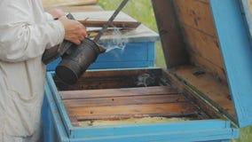 l'apicoltore ottiene il favo dall'alveare, miele, api, macro dell'arnia video d archivio