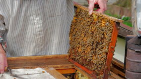 L'apicoltore ottiene la struttura dall'alveare video d archivio