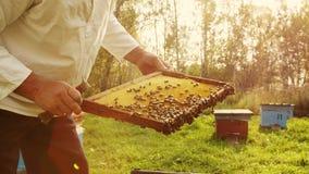 L'apicoltore ottiene una struttura dall'alveare stock footage