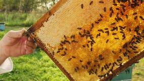 L'apicoltore ottiene una struttura dall'alveare video d archivio