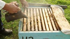 L'apicoltore ottiene una struttura dall'alveare archivi video
