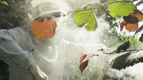L'apicoltore professionista sottopone a fumigazione l'alveare a fumigazione con il fumatore dell'ape stock footage