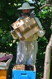 L'apicoltore scuote lo sciame delle api nell'alveare blu - dettaglio Fotografie Stock Libere da Diritti
