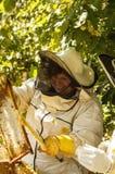 L'apicoltore sta lavorando con le api immagini stock libere da diritti