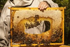 L'apicoltore sta lavorando con le api fotografia stock libera da diritti