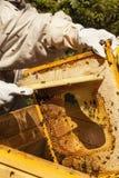 L'apicoltore sta lavorando con le api immagini stock