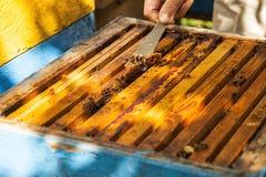 L'apicoltore sta lavorando con le api fotografie stock