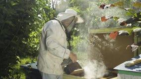 L'apicoltore in uniforme protettiva sottopone a fumigazione l'alveare a fumigazione con il fumatore dell'ape al rallentatore archivi video