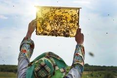 L'apiculteur avec un cadre d'abeille vérifie la culture de miel photographie stock