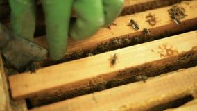L'apiculteur de hiver d'homme enlève le cocon vide, qui reste de l'utérus, de la ruche banque de vidéos