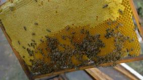 L'apiculteur de rucher banque de vidéos