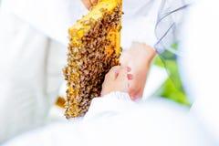 L'apiculteur donne aux enfants une occasion de toucher et examiner le nid d'abeilles photos libres de droits