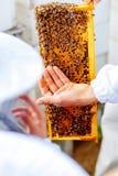 L'apiculteur donne aux enfants une occasion de toucher et examiner le nid d'abeilles image stock