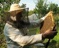 L'apiculteur et le cadre avec des abeilles images libres de droits