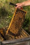 L'apiculteur garde entièrement le nid d'abeilles du miel Photographie stock