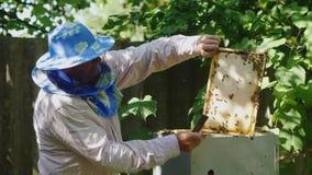 L'apiculteur inspecte des cadres avec des abeilles, travaille dans le rucher clips vidéos