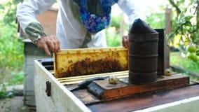 l'apiculteur prend hors de la ruche ou du rucher le cadre pour des abeilles banque de vidéos