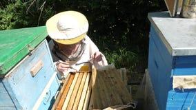 L'apiculteur sort le nid d'abeilles sur le cadre en bois pour commander la situation dans la colonie d'abeille banque de vidéos