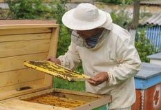 L'apiculteur travaille avec des abeilles et des ruches sur le rucher photo stock