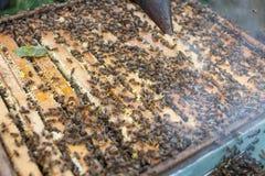 L'apiculteur travaille avec des abeilles et des ruches sur le rucher Apiculteur sur le rucher Images libres de droits
