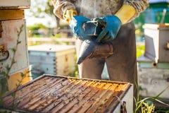 L'apiculteur travaille avec des abeilles et des ruches sur le rucher Apiculteur sur le rucher Photographie stock
