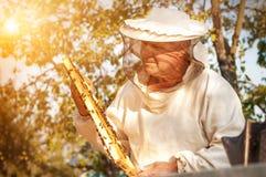L'apiculteur travaille avec des abeilles près des ruches Apiculture photos libres de droits