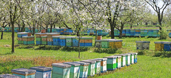 L'apiculture, abeilles et ruches photo stock