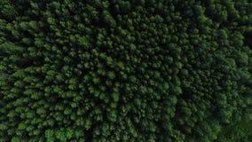 l'appareil-photo de vue aérienne de 4K HD déplace l'augmentation de la forêt verte banque de vidéos