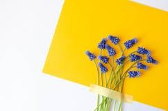 L'appartement juteux lumineux s'étendent avec les fleurs bleues photos stock